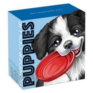 puppies-border-collie-half-oz-silber-koloriert-shipper