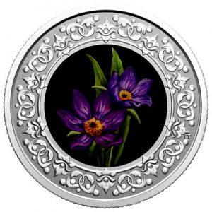 floral-emblems-of-canada-prairie-crocus-silber-koloriert