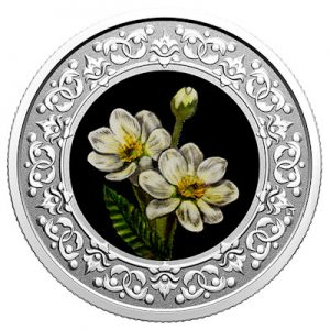floral-emblems-of-canada-silberwurz-silber-koloriert