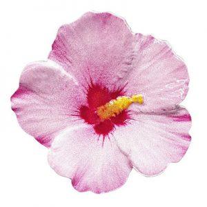 blumenserie-hibiskus-1-oz-silber-koloriert